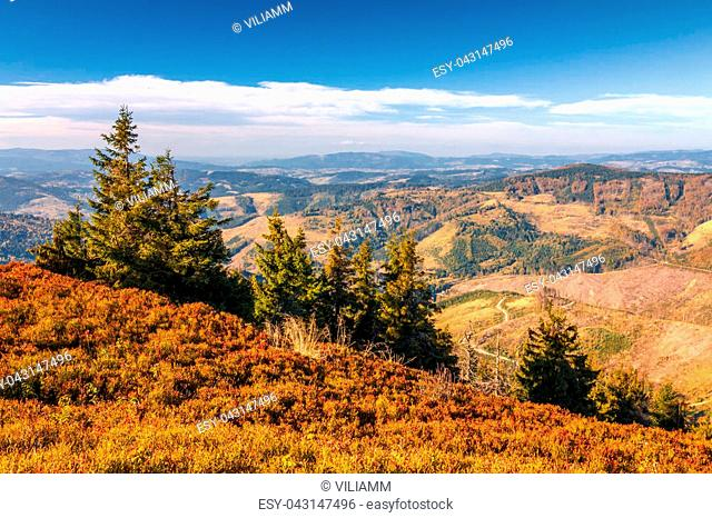 Autumn mountainous landscape with spruce trees in the foreground, region Kysuce in Slovakia, Europe