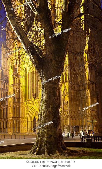 England, North Yorkshire, York City  Grand tree with the equally grand York Minster Cathedral in the distance, with a street busker playing a piano at night