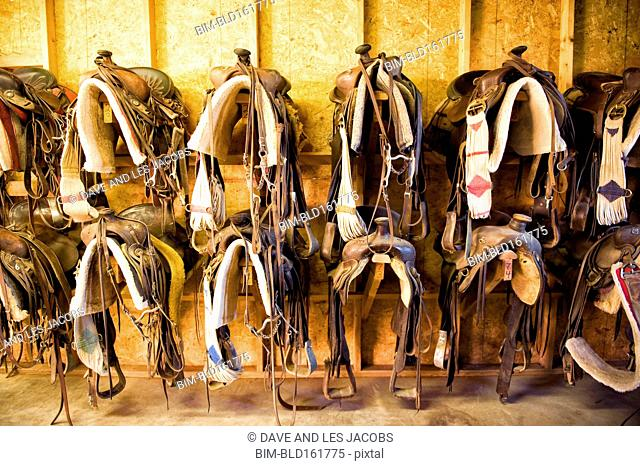 Saddles hanging in barn