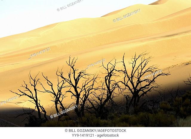 Sand dunes in early morning light - Great Sand Dunes National Park and Preserve - near Mosca, Colorado