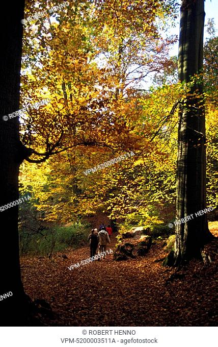 BELGIUM SOIGNES FORESTBRUSSELSBEECHFAGUS SYLVATICAROUGE CLOITRE - ROOD KLOOSTER