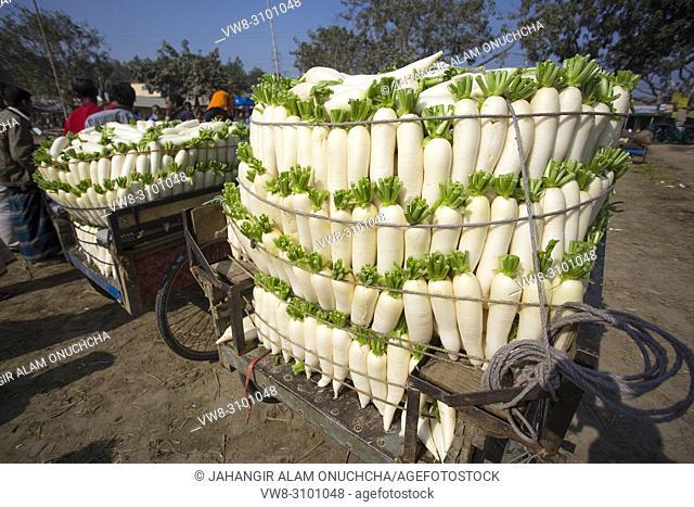 Labors are stacking vegetables in mahasthan hat (popular vendor market), Bogra district, Bangladesh