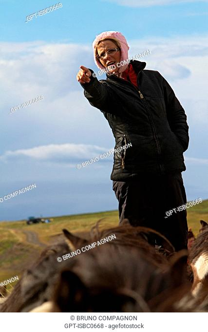 THE BIG ROUND-UP OF HERDS OF HORSES, AN ICELANDIC TRADITION THAT CONSISTS OF BRINGING BACK THE HORSES WHICH HAD BEEN IN MOUNTAIN PASTURE IN SUMMER