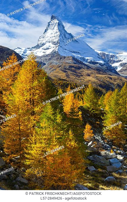 Matterhorn and larch tree forest in autumn, Vallais, Switzerland