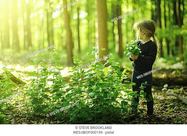 Girl in forest picking flowers