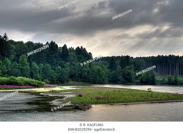 succession at a lake at midsummer low water, Germany, North Rhine-Westphalia, Moehnesee