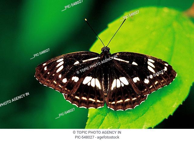 A Butterfly,Korea
