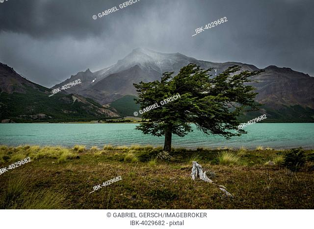Tree in a storm, Lago Burmeister, Perito Moreno National Park, Patagonia, Argentina
