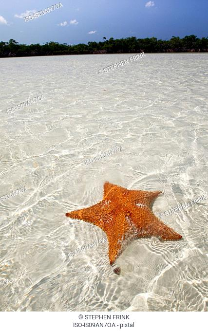 Sea Star in shallow water