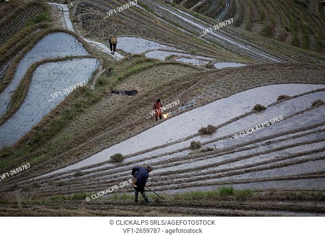 Asia, China, Guilin, Longji, Rice terraces, farmers,