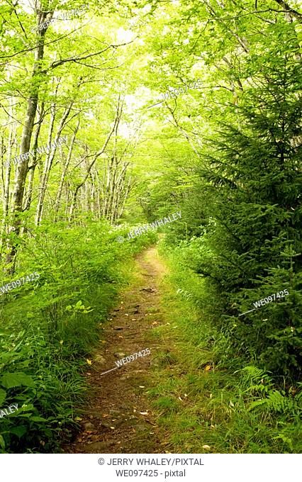 Trail, Shinning Rock Wilderness Area, Pisgah Nat  Forest, NC