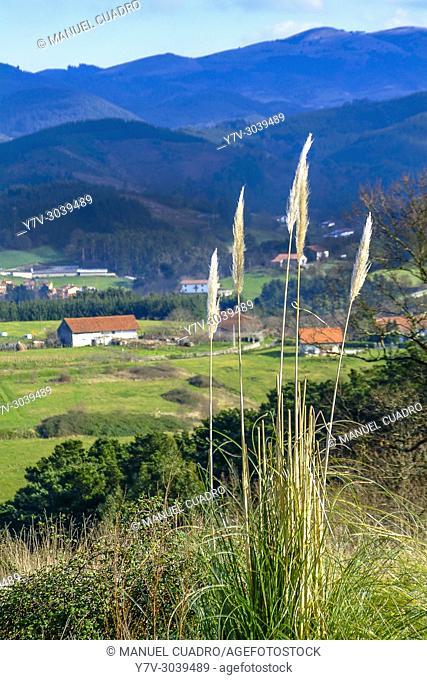 Reserva de la Biosfera de Urdaibai, municipio de Ibarrangelu, Vizcaya, Basque Country, Spain