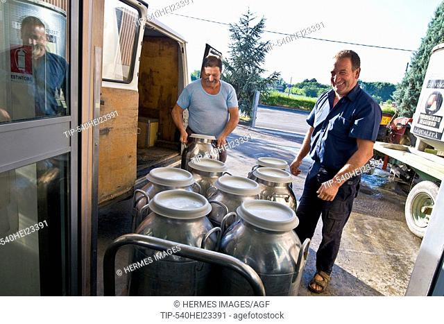 Delivery of milk for the production of Parmigiano-Reggiano cheese - Coop Casearia Castelnovese, Castelnuovo Rangone ( Province of Modena, Italy)