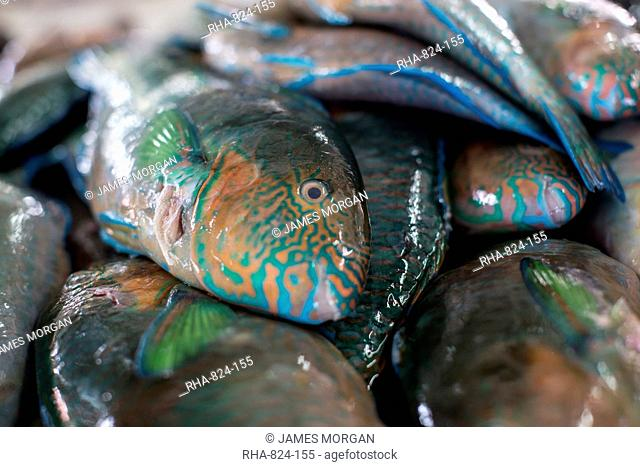Parrotfish (Scaridae) an important herbivore in the coral reef ecosystem, for sale in Kudat fish market, Sabah, Malaysian Borneo, Malaysia, Southeast Asia, Asia
