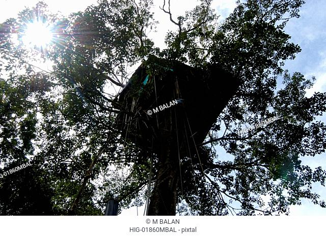 TREE HOUSE WAYANAD