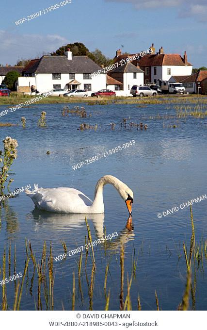 Pagham Quay; Sidlesham Quay; West Susses; UK; high tide; swan