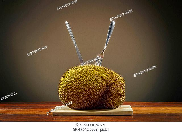Jackfruit (Artocarpus heterophyllus) on a table with cutlery sticking in it