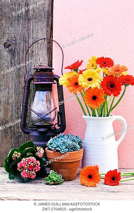 Colourful Daisy flowers with succulant plants and vintage rusting oil lantern