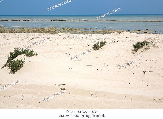 Qatar - Fuwairit - The beach