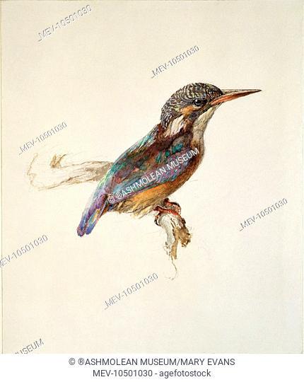 Kingfisher. John Ruskin