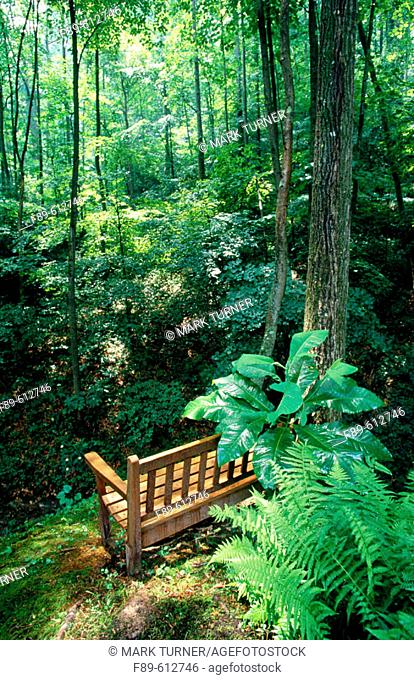 Wooden bench overloooking shady ravine, framed by ferns (Thelypteris noveboracensis)