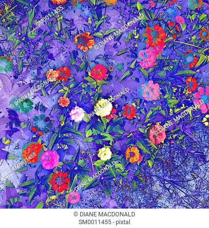 A colourful background of flowers