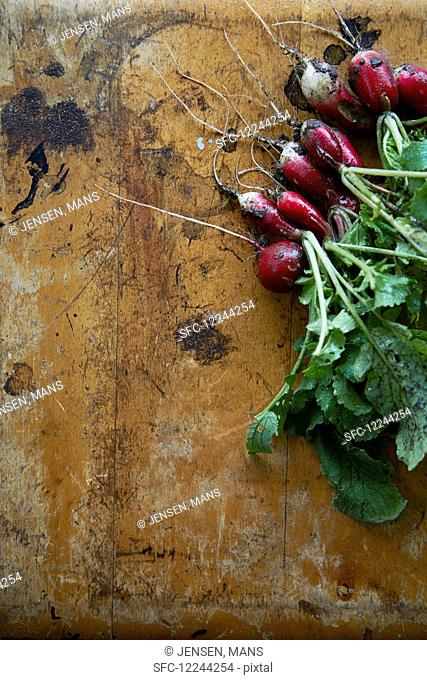 Radishes on a metal background
