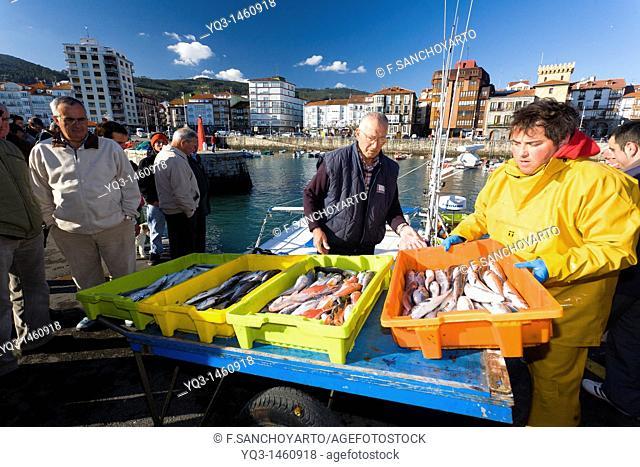 Fishermen unloading fish at port, Castro Urdiales, Cantabria, Spain