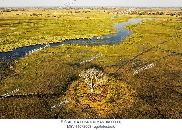 The Gomoti River with its adjoining freshwater marshland the whitish tree has died back due to the permanently wet environment aerial view - Okavango Delta