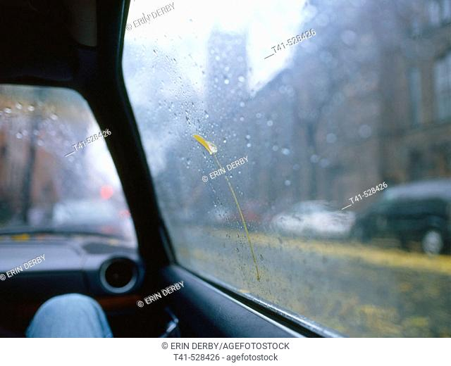 After a rain storm in Brooklyn, ny a yellow leaf is stuck to a car window amongst the rain drops. The car is an 81 Mercedes and the leaf held on for several...