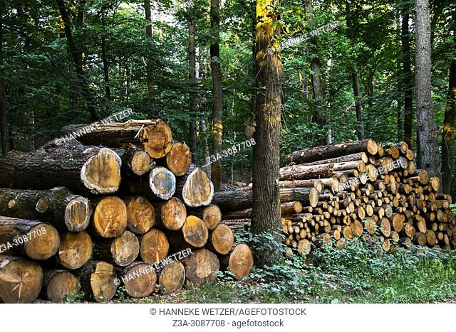 Berg en Dal, Netherlands. Cut trees on a pile inside a forest during summer