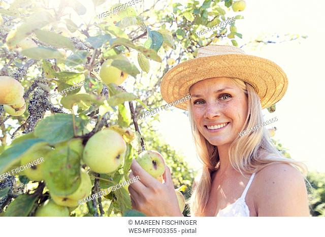 Young woman with straw hat picking apples from tree