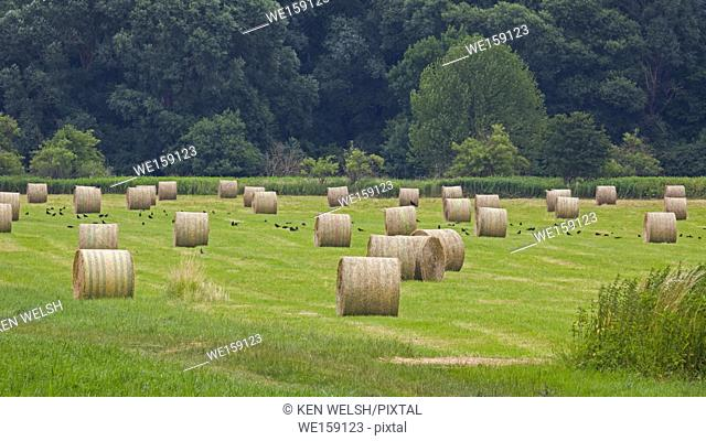 near Lake Balaton, Hungary. Field with rolls of hay