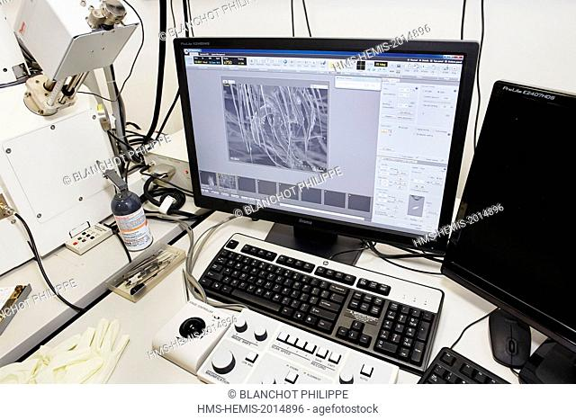 France, Paris, National Museum of Natural History, Scientist taking pictures of arachnids with a Scanning Electron Microscopy (SEM)