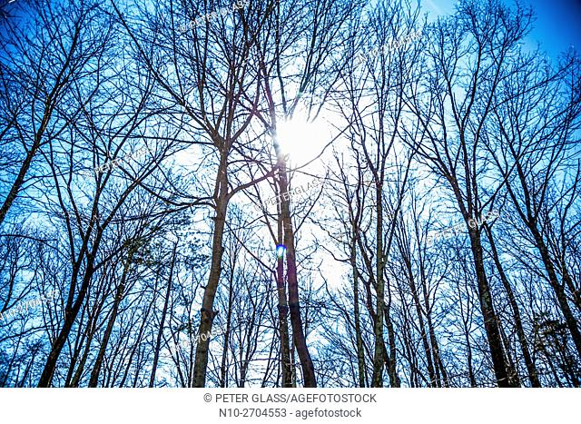 Sun shinning through trees
