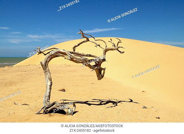 Sand Dune in San Román cape in Falcon State Venezuela