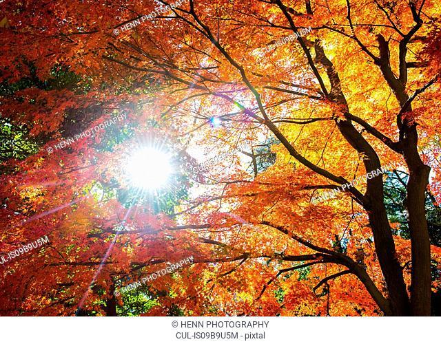 Autumn colours, Shinjuku Gyoen National Garden, Tokyo