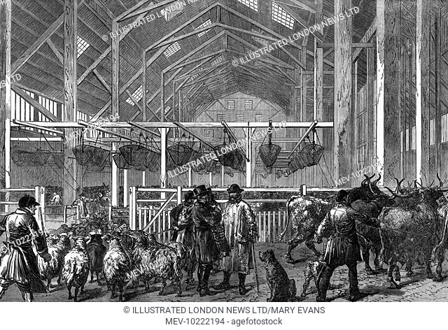 Engraving showing the interior of the Foreign Cattle Market at Deptford, London, in 1872.   This image shows a number of sheep and cattle in the Central Shed of...