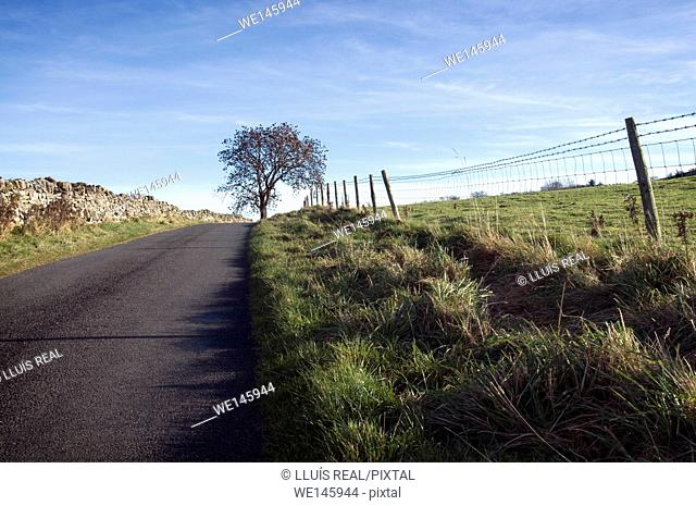 Country road with tree in the background in Yorkshire Dales , England