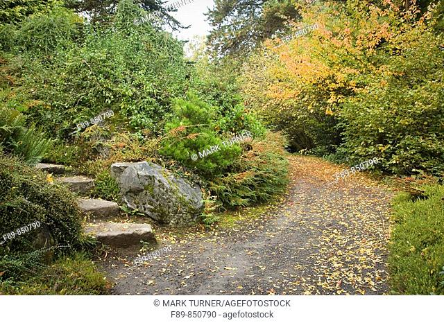 Wide gravel path & stone steps in naturalistic Japanese garden Cotoneaster sp , Pinus sp Kubota, Seattle, WA