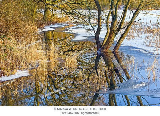 "Winter in Biosphere reserve """"Elbe River Landscape"""", Amt Neuhaus, Lower Saxony, Germany, Europe"