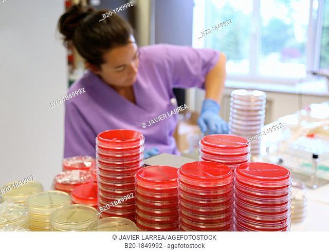 Antibiogram, urine specimens, Microbiology Department, Donostia Hospital, San Sebastian, Donostia, Gipuzkoa, Basque Country, Spain
