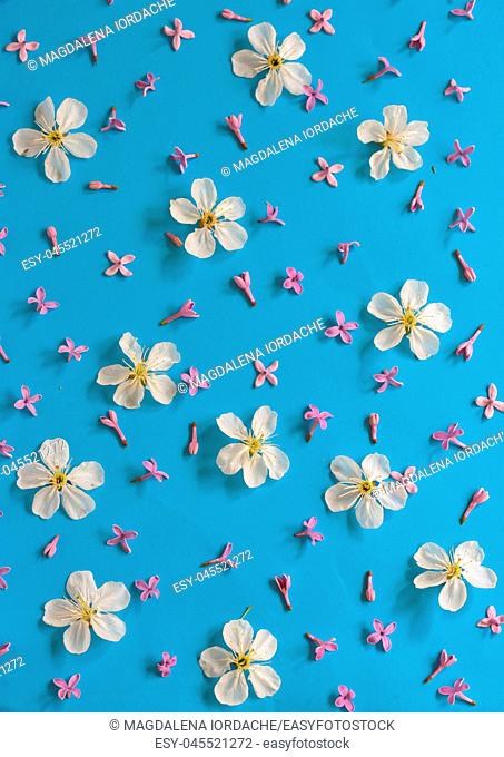 White cherry blossoms on blue paper background