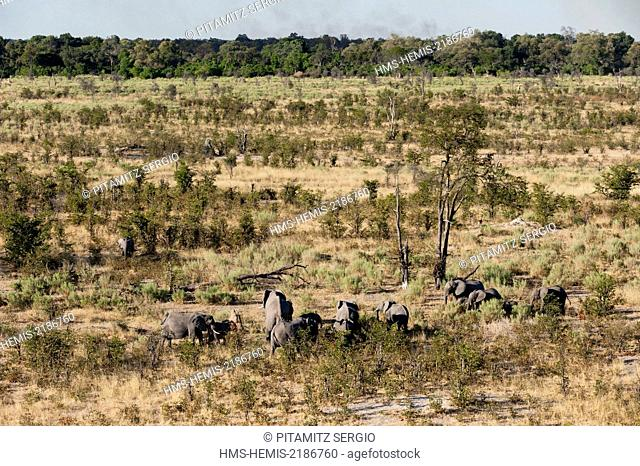 Botswana, Okavango Delta, listed as World Heritage by UNESCO, African elephants (Loxodonda africana) (aerial view)