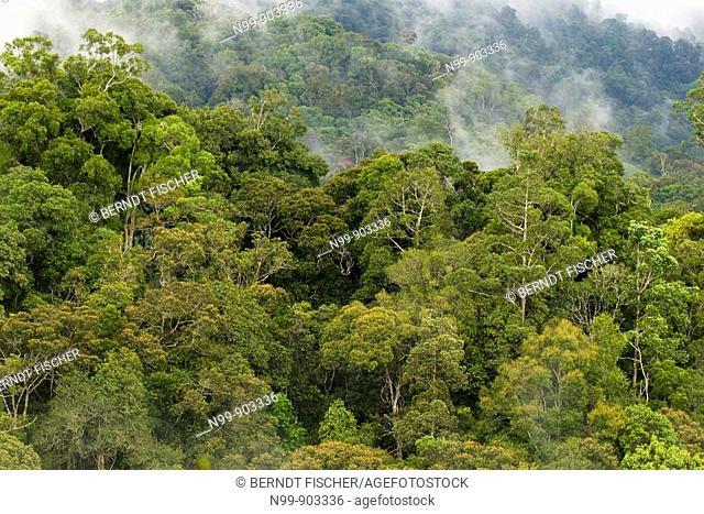 Mountain rainforest Kinabalu National Park Sabah Borneo Malaysia