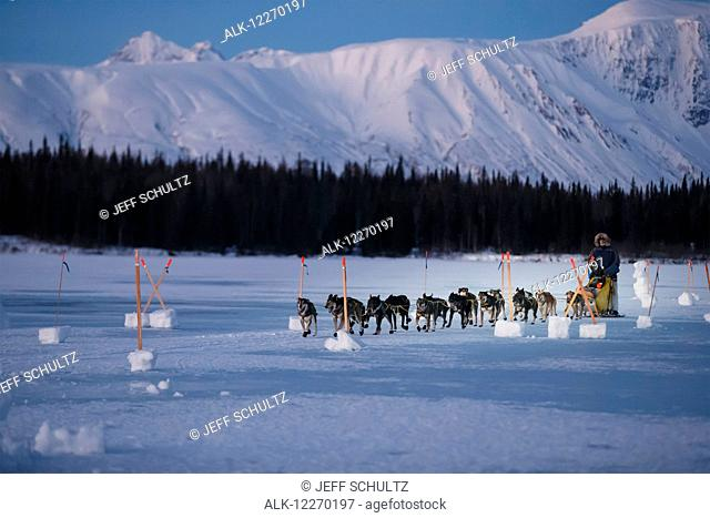 Hans Gatt runs into the Finger Lake checkpoint, Iditarod Sled Dog Race 2014