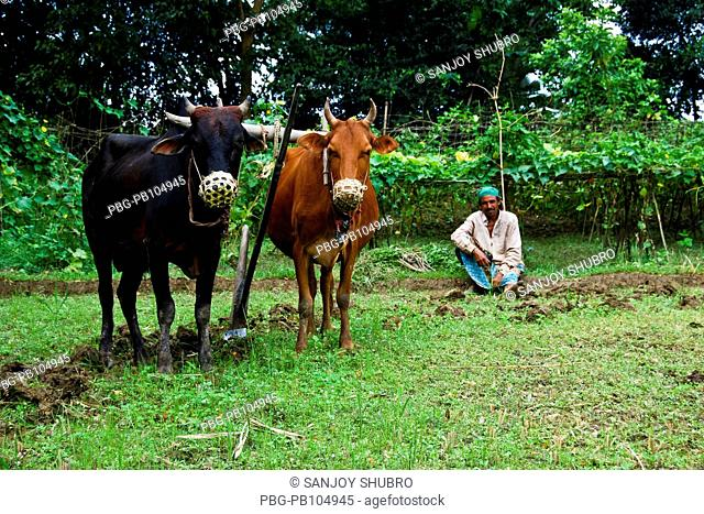 Farmer and his cattle taking rest in the field Chittagong, Bangladesh September 17, 2008