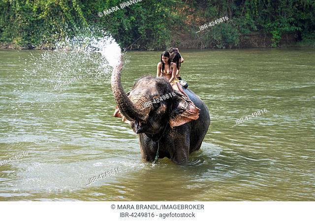 Elephant spraying tourists, Kanchanaburi Province, Central Thailand, Thailand