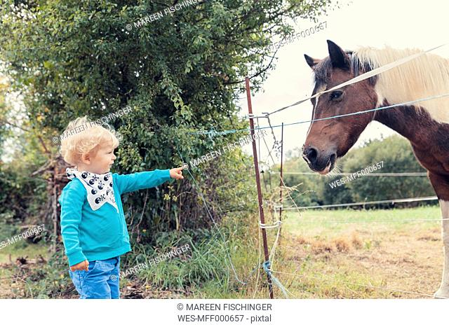 Little boy pointing at a horse