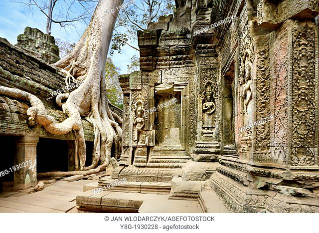 Angkor - tree growing out of the ruins of the the Ta Prohm Temple, Angkor Temple Complex, Siem Reap Province, Cambodia, Asia, UNESCO